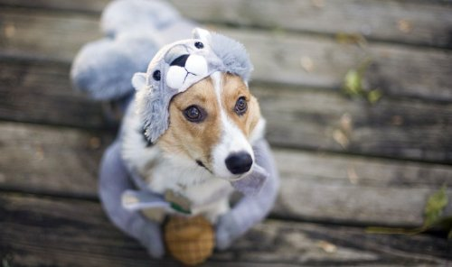 Halloween Inspo For Your Pet and Home + the Freshest Looks for Fall
