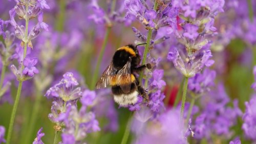 This is how you can protect and encourage wildlife in your garden