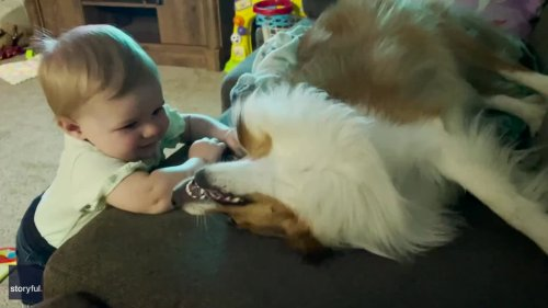 I Woof You! Dog Gives Baby Best Friend Adorable Smooches