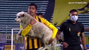 Soccer Game Gets Put on Hold After Cute Dog Steals the Show