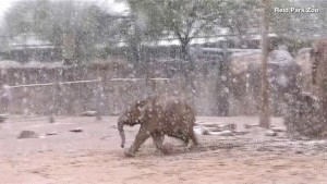 These Adorable Elephants Enjoyed a Snow Day