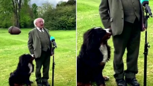 Irish president's dog tries to interrupt interview