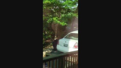Bear Breaks Into Tennessee Man's Car in Gatlinburg