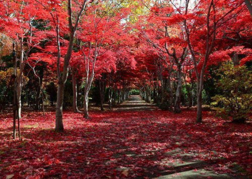 Hokkaido Autumn Foliage 2021: 9 Best Places For Fall Leaves (And When To See The