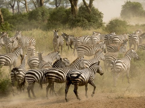 Travel to Africa for a Safari!