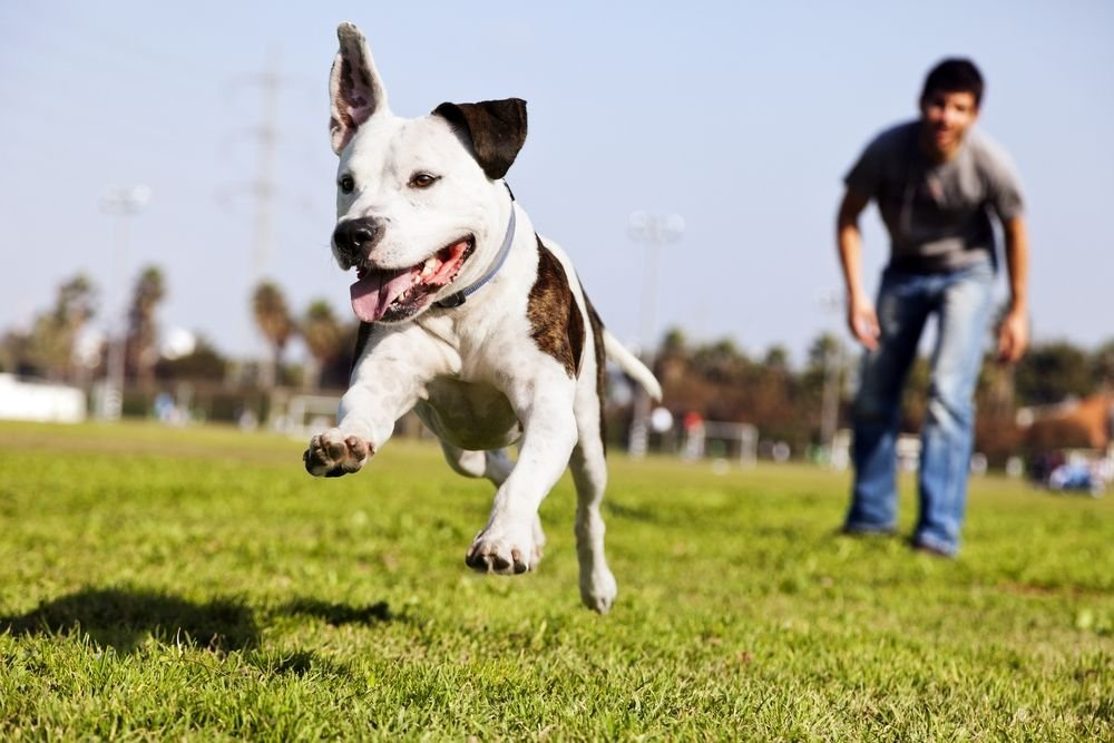 What to Know Before Visiting the Dog Park, Plus More Summer Safety Tips
