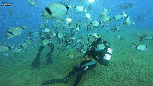 Scuba divers feed fish on Zenobia wreck
