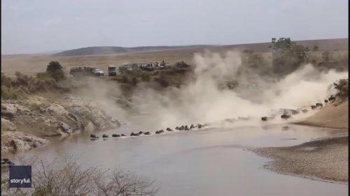 Stunning Footage Captures Wildebeest Herd Charging Through Water in Kenya