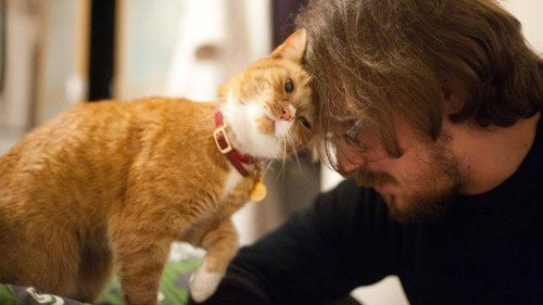 13 Things Cats Do When They Love You