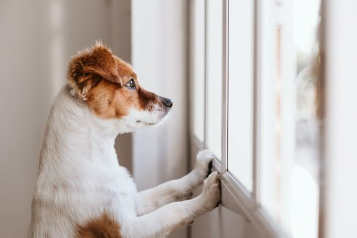 15 Quietest Dog Breeds