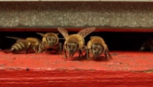 This Is the World's First Bee Hotel, Where You Can Buy a Hive and Become a Beekeeper
