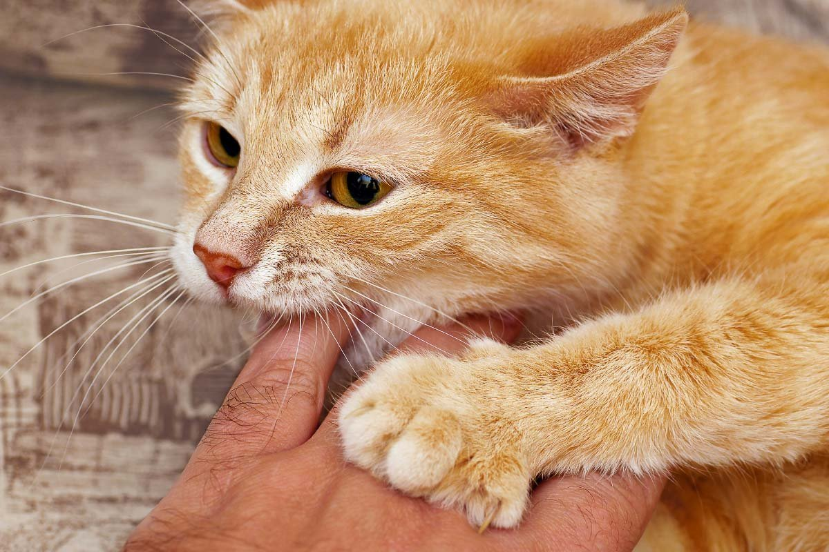 10 Awesome Cat Hacks