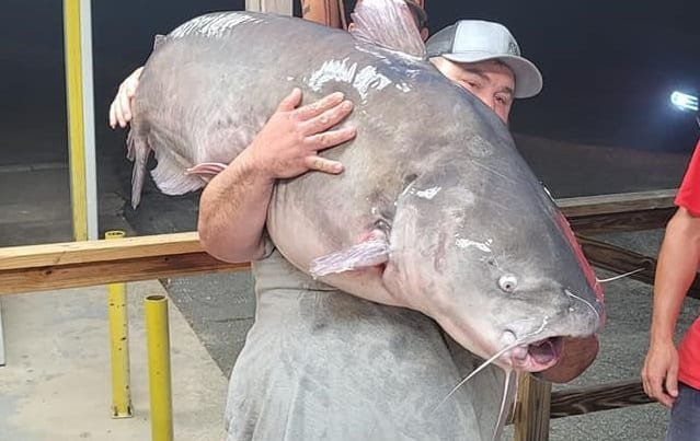 "This massive ""dinosaur"" blue catfish is setting the fishing world on fire"