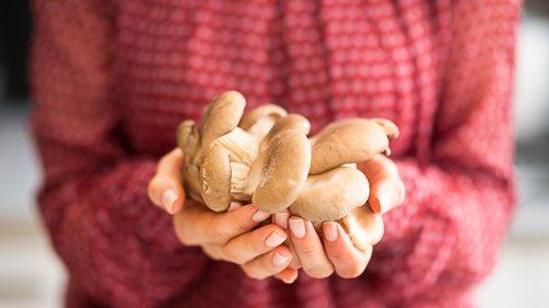 Mushroom Mania - Learn to Grow & Cook Mushrooms at home