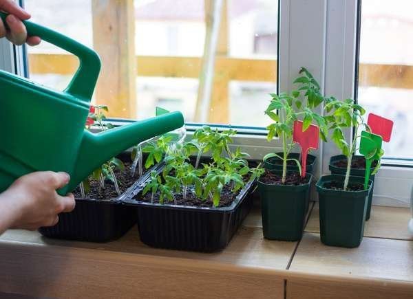 Starting Seeds Indoors: 8 Critical Mistakes Most New Gardeners Make