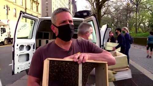 Buzz for beehives in New York City