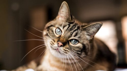 Things Every Cat Owner Wished They'd Known Before Adopting