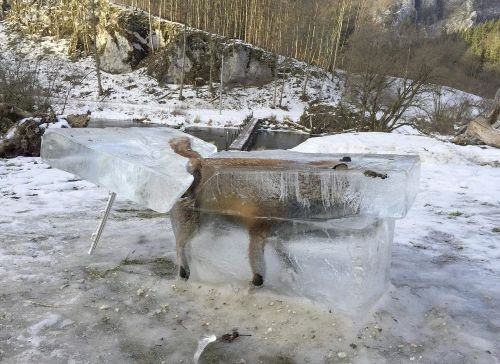 Hunter's frozen fox photo is just one of the month's craziest nature moments