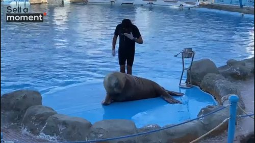 Circus Seal Greet Guests With Trainer