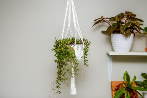 How to Make a Simple Macrame Plant Hanger—Even if You Aren't Crafty