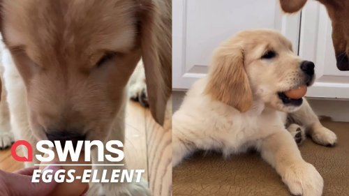 Adorable puppy takes on the viral egg challenge...and REFUSES to give it back!