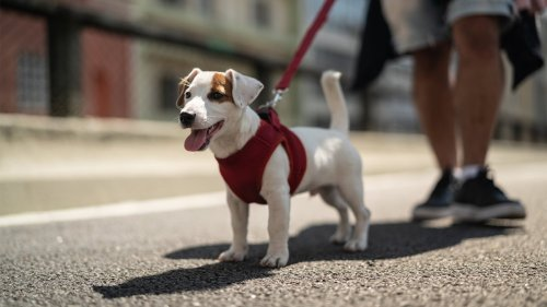 The Best Way to Leash Your Dog and Walk Your Furry Friend Safely
