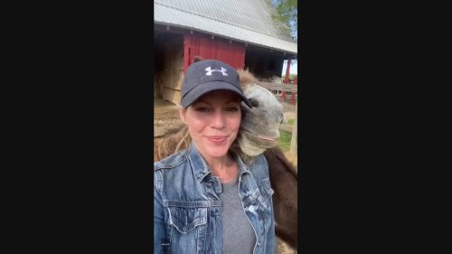 Hee-aww! Cute Donkey Nuzzles Up to Owner