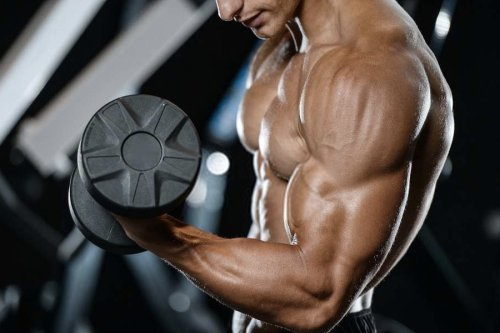 7 Best Workout Guides: Head to Toe Exercises to Get You Shredded