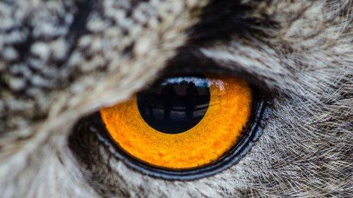 Owls are Weird