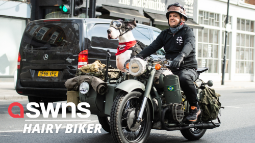 Meet the real life Gromit - a Great Dane that loves to ride around in his owner's motorbike SIDECAR (RAW)