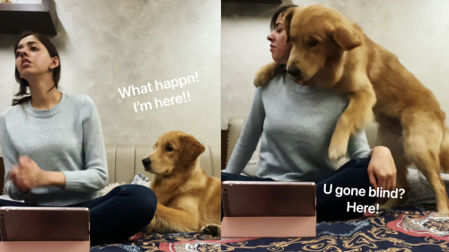 'Golden Retriever's Epic Response to the Call Your Dog Challenge'