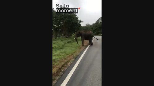 Elephant Takes Charge at Car