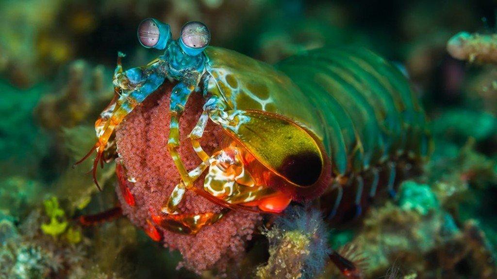 Watch: Amazing Creatures Doing Amazing Stuff