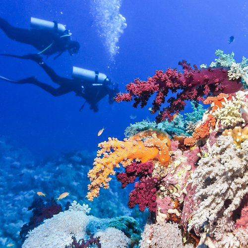 Happy World Ocean Day! The Underwater Phenomenons You Must See