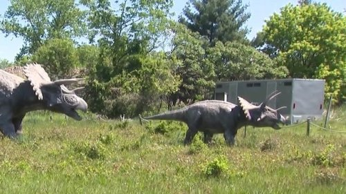 The dinosaurs are back! Field Station Dinosaurs officially reopens today