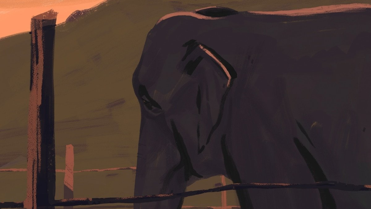 Inside the fight for animal personhood—and 4 more captivating tales