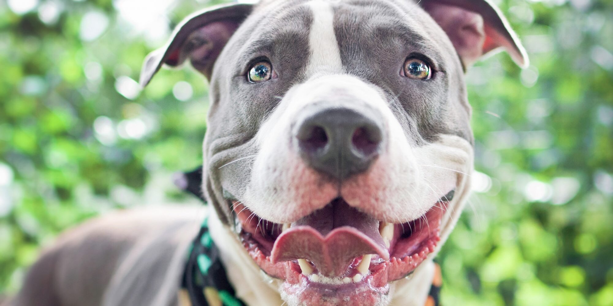 10 of Our Best Rescue Dog Stories