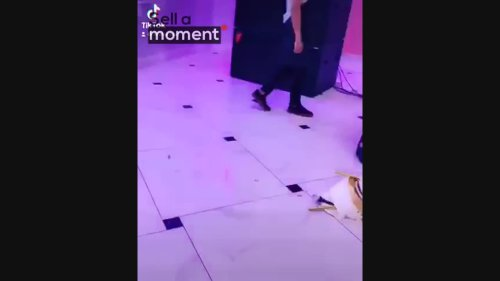 Clumsy Waiters Drop Wedding Cake