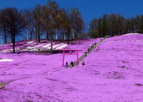 Japan's Flower Power Will Leave You Spellbound