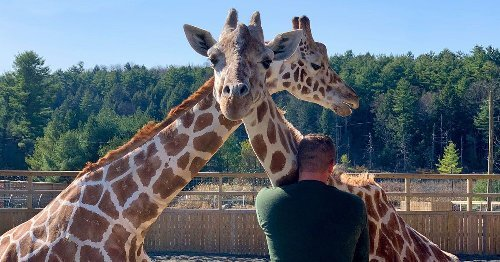 Rest in Peace, April the Giraffe