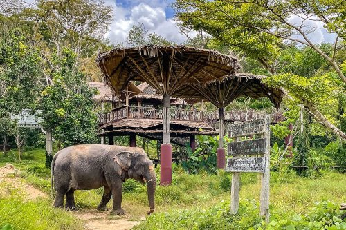 TRAVEL BUCKET LIST IDEA - VISITING AND ELEPHANT SANCTUARY IN THAILAND
