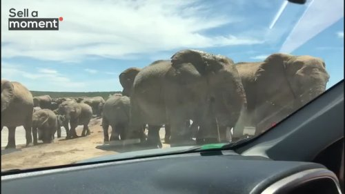 Elephants hang out at waterpoint