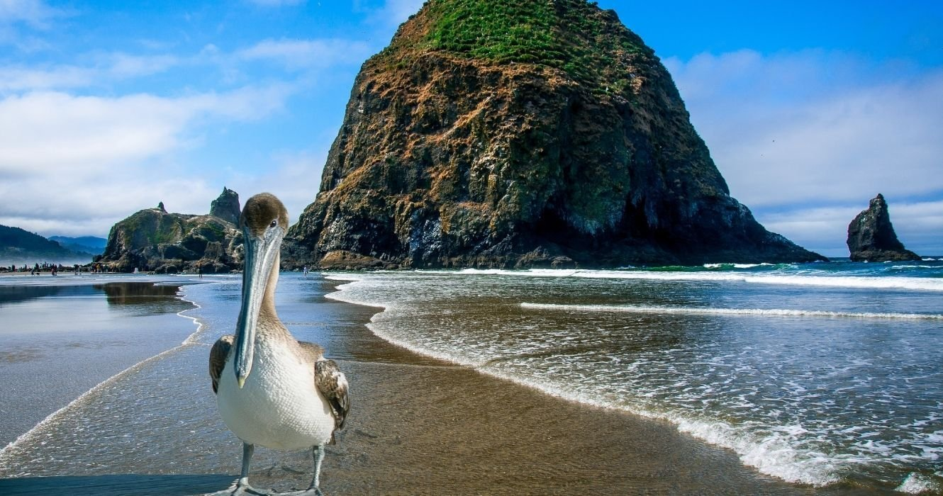 Plan Your Beach Getaway Close To Home: Best Beaches To Visit Close To You