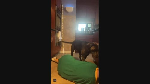 Prank Fail: Dog Picks Up Knife After Owner Pretends to Choke