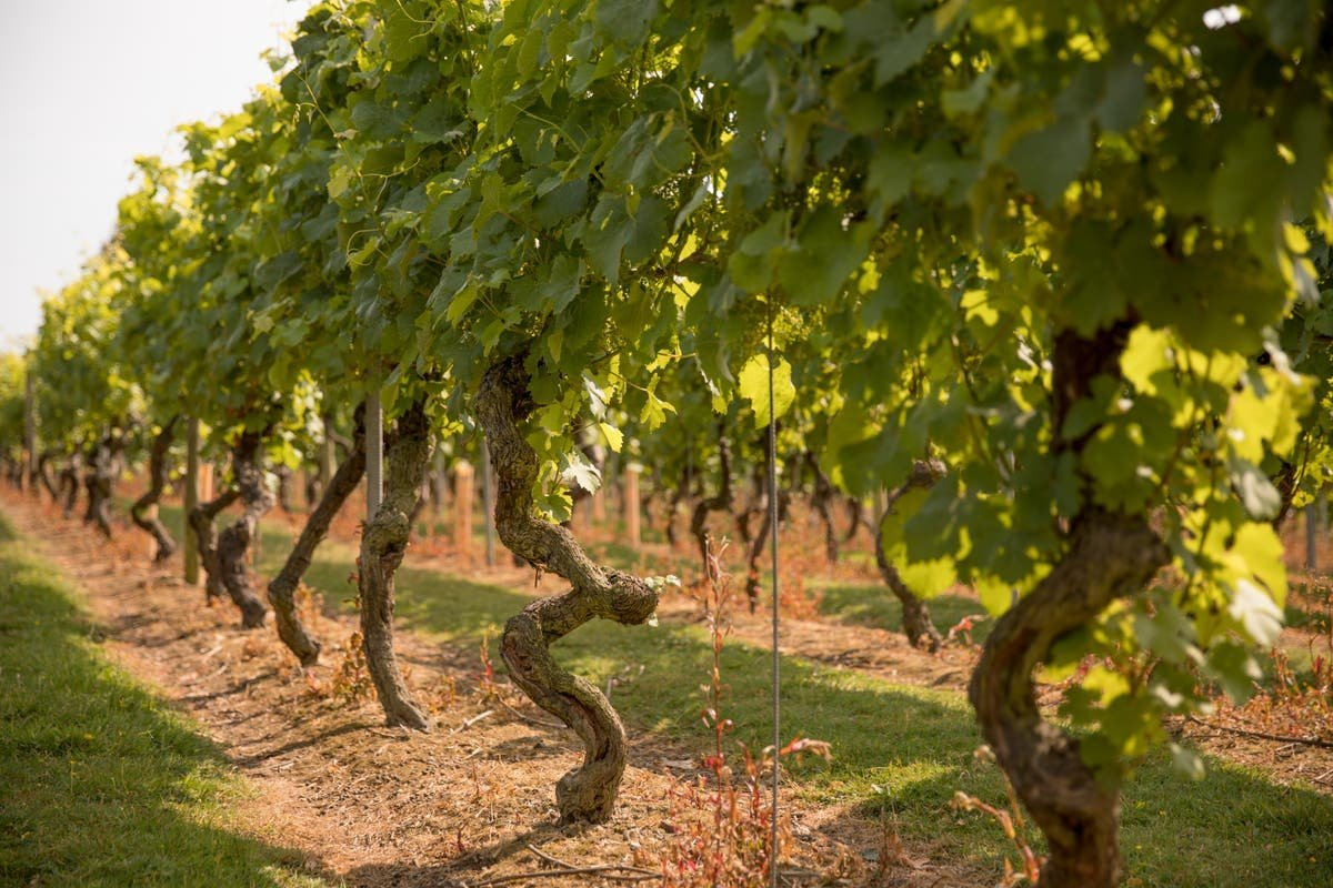 Climate Change and Wine: How the Emergency Is Affecting Our Vino