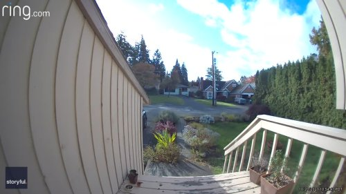Fearless Pet Cat Chases Invading Animal From Portland Home