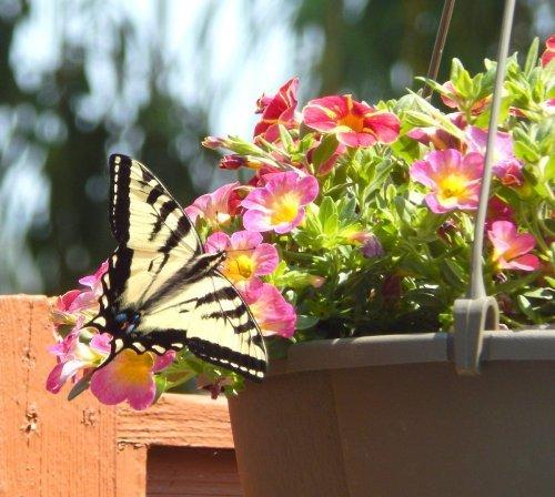 Container Garden Ideas for Patios and Porches