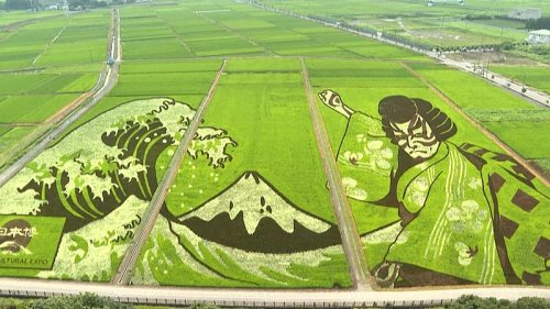 Japan city transforms agricultural land into works of art