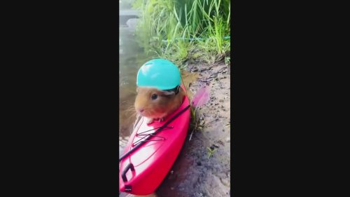 Adorable Row-dent Floats Along in Pint-Sized Kayak