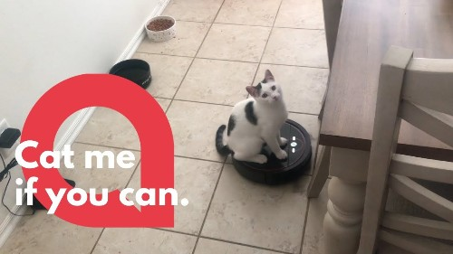 Cute kitty glides around the house on his owner's Roomba!